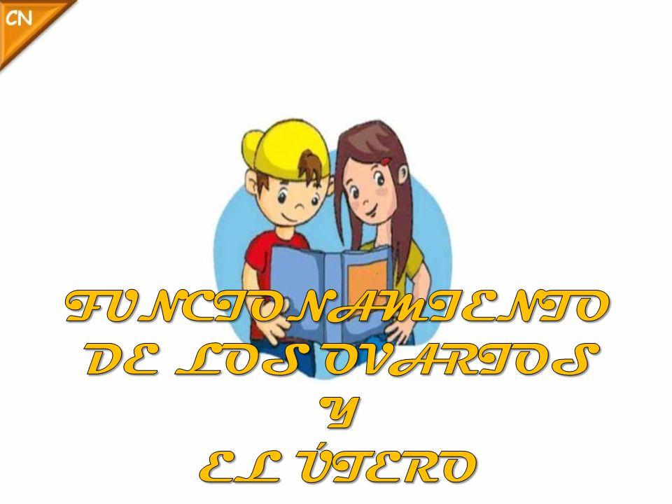 FUNCIONAMIENTO DE LOS OVARIOS Y EL ÚTERO