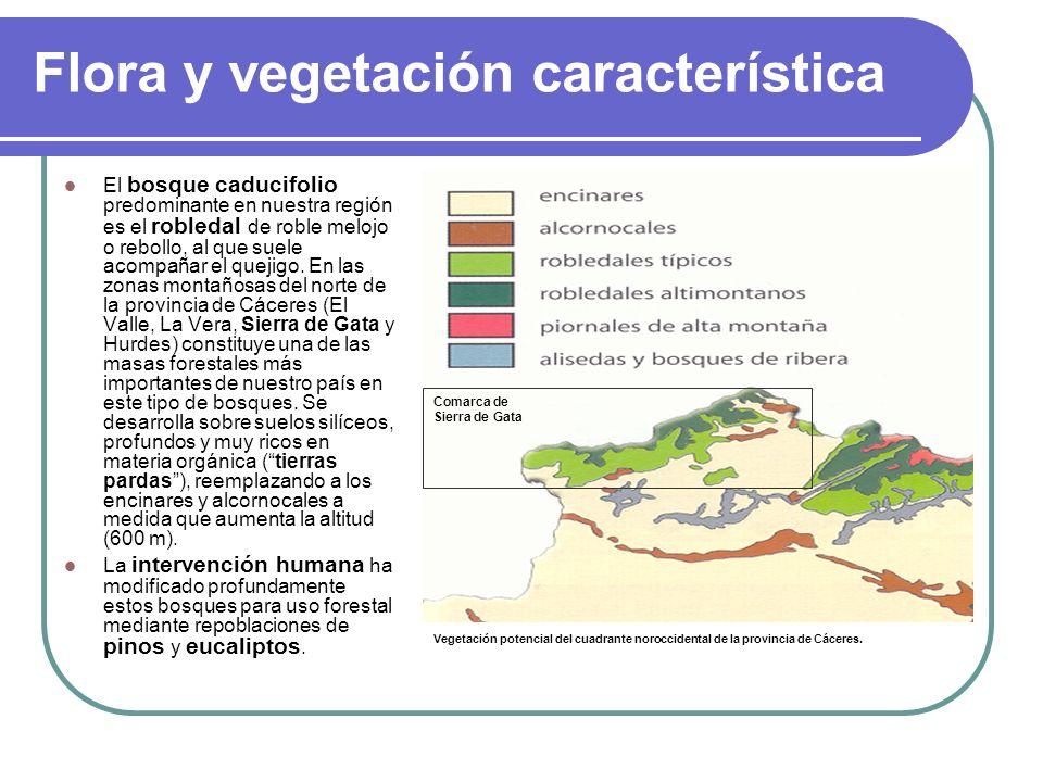Flora y vegetación característica
