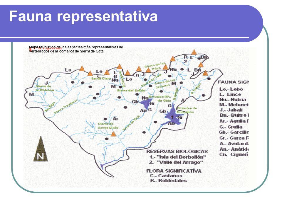 Fauna representativa Mapa faunístico de las especies más representativas de vertebrados de la comarca de Sierra de Gata.