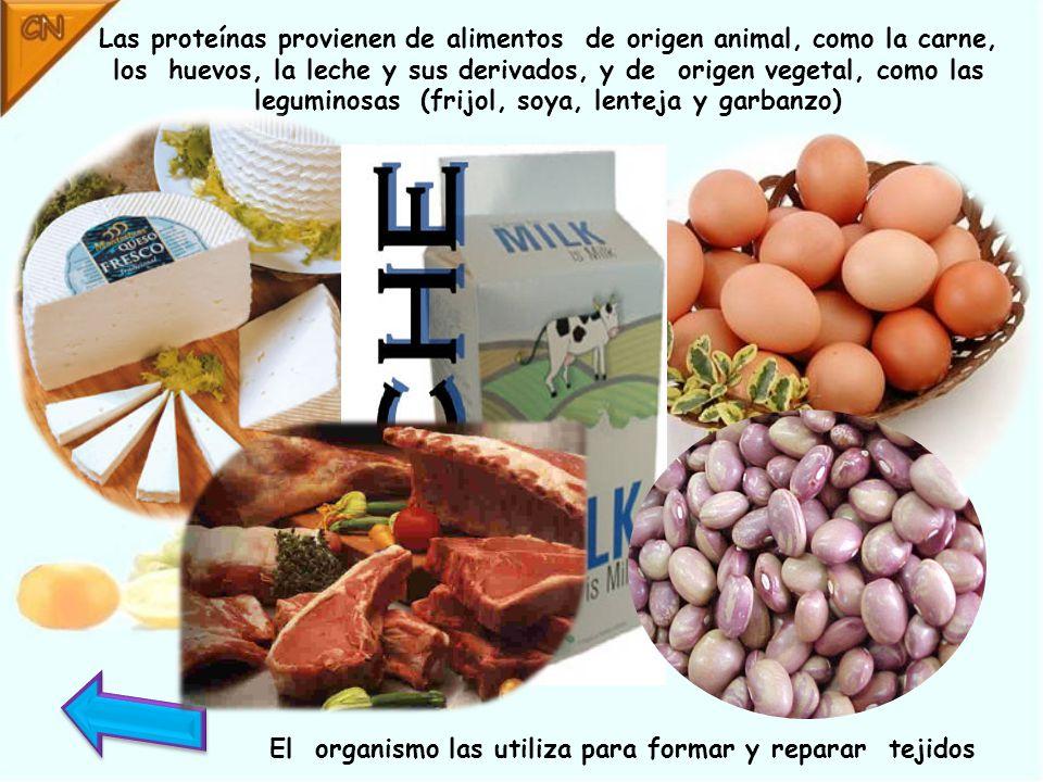Las proteínas provienen de alimentos de origen animal, como la carne, los huevos, la leche y sus derivados, y de origen vegetal, como las leguminosas (frijol, soya, lenteja y garbanzo)