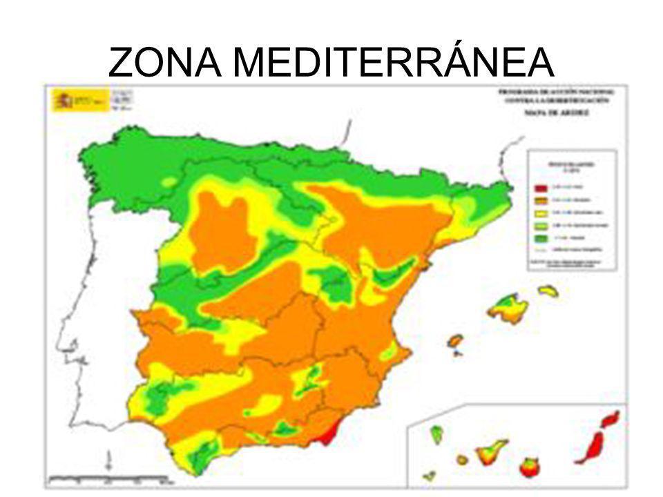 ZONA MEDITERRÁNEA
