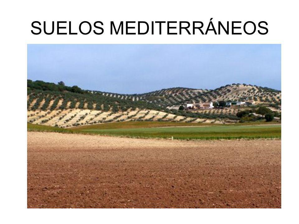 SUELOS MEDITERRÁNEOS