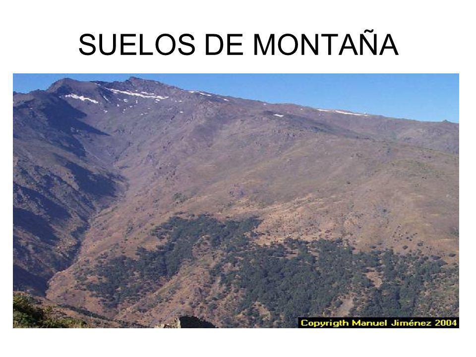 SUELOS DE MONTAÑA