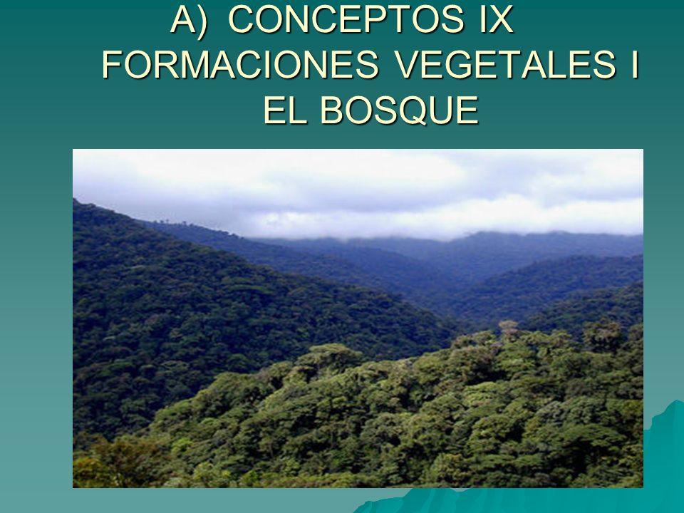 CONCEPTOS IX FORMACIONES VEGETALES I EL BOSQUE