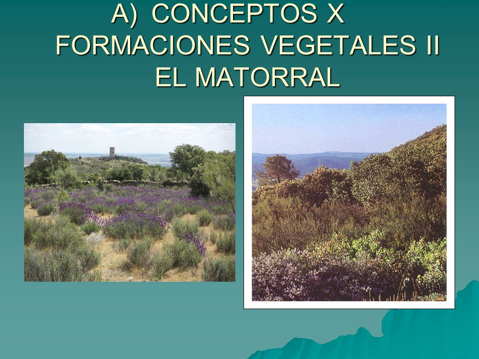 CONCEPTOS X FORMACIONES VEGETALES II EL MATORRAL
