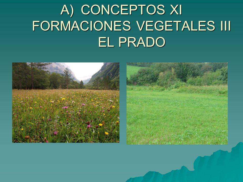 CONCEPTOS XI FORMACIONES VEGETALES III EL PRADO