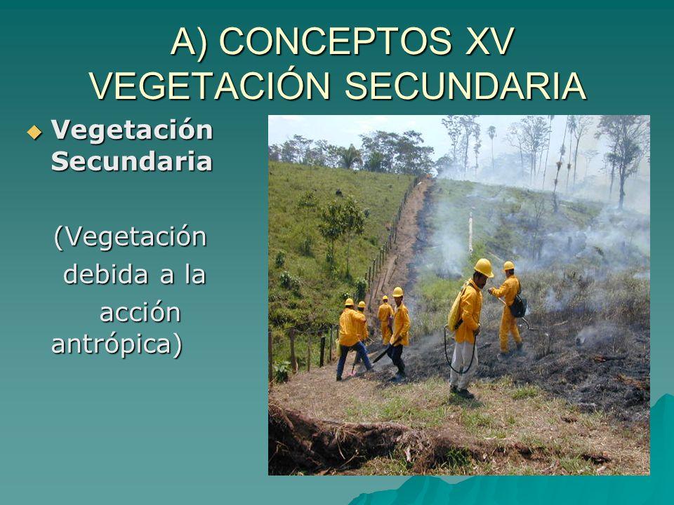 A) CONCEPTOS XV VEGETACIÓN SECUNDARIA