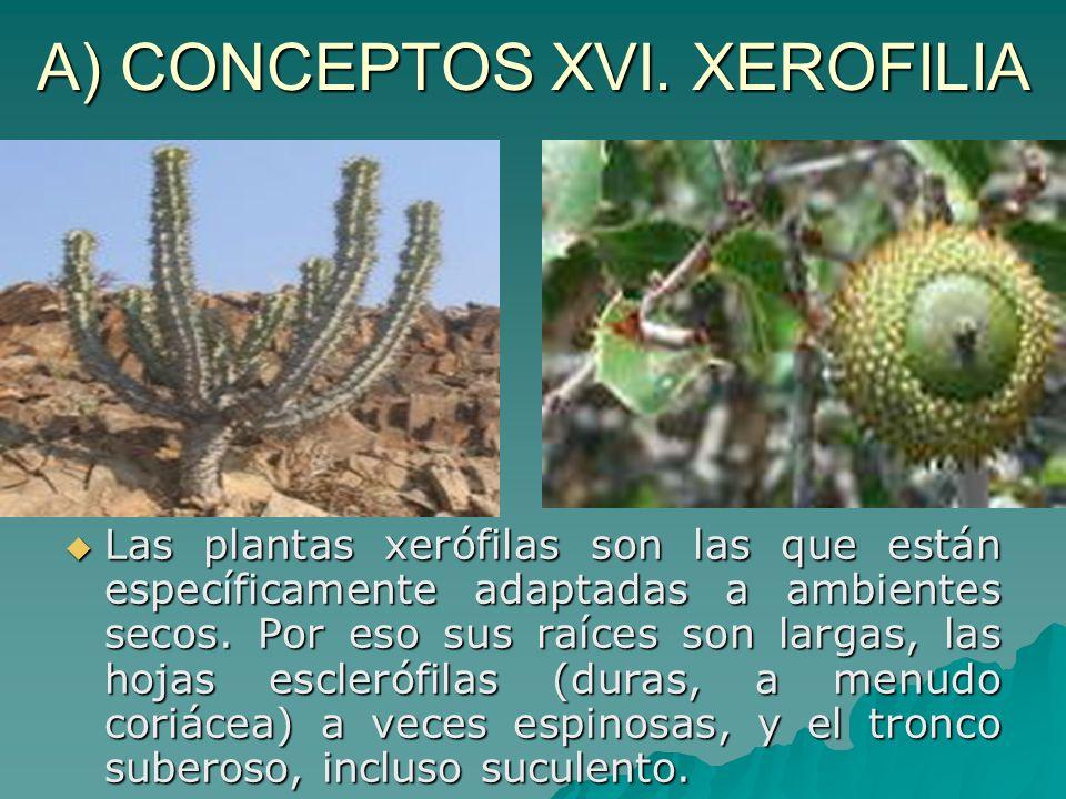 A) CONCEPTOS XVI. XEROFILIA