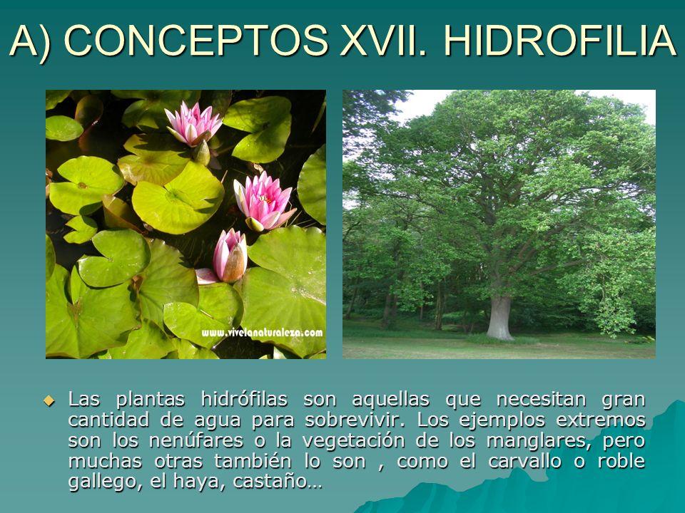 A) CONCEPTOS XVII. HIDROFILIA
