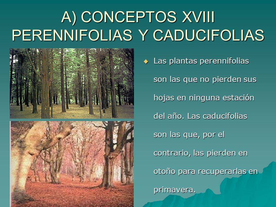 A) CONCEPTOS XVIII PERENNIFOLIAS Y CADUCIFOLIAS