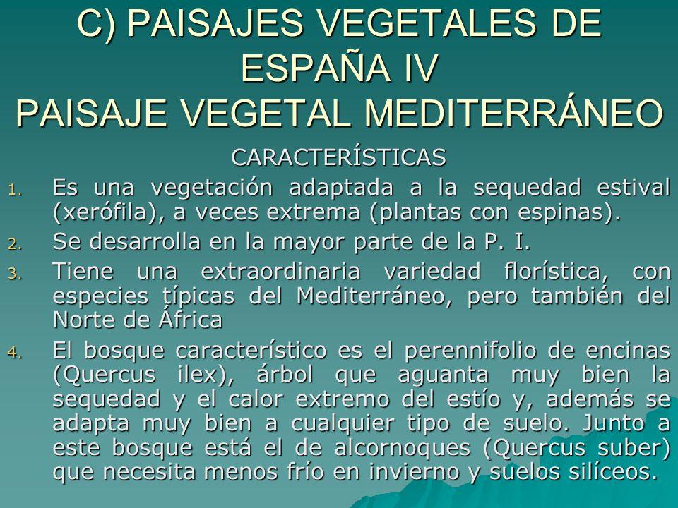 C) PAISAJES VEGETALES DE ESPAÑA IV PAISAJE VEGETAL MEDITERRÁNEO