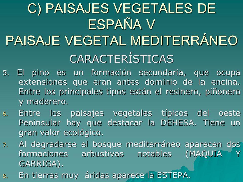C) PAISAJES VEGETALES DE ESPAÑA V PAISAJE VEGETAL MEDITERRÁNEO