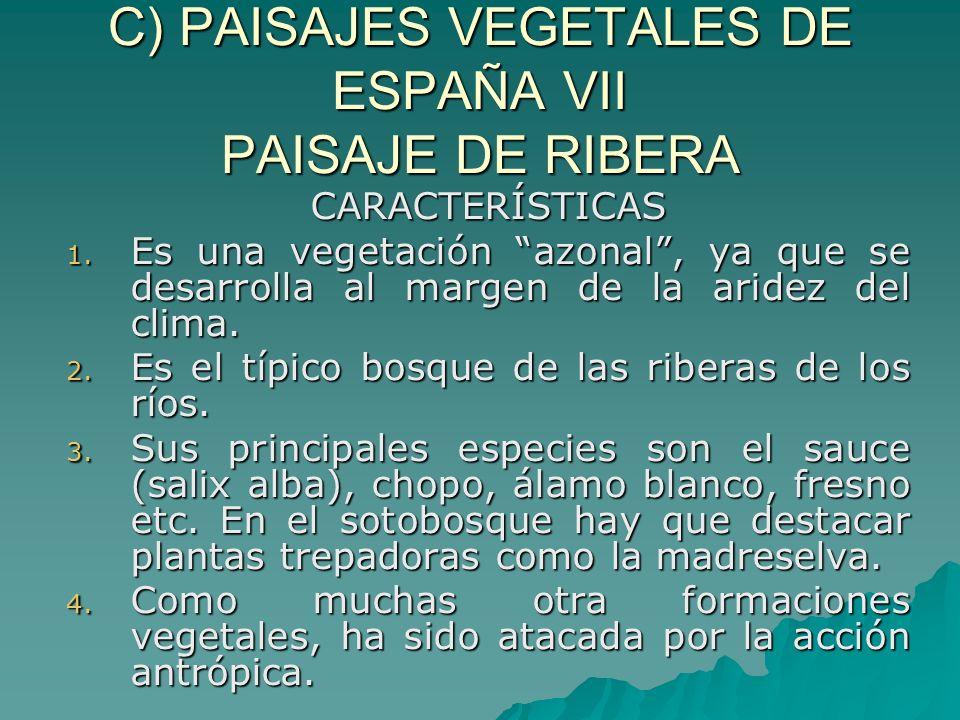 C) PAISAJES VEGETALES DE ESPAÑA VII PAISAJE DE RIBERA