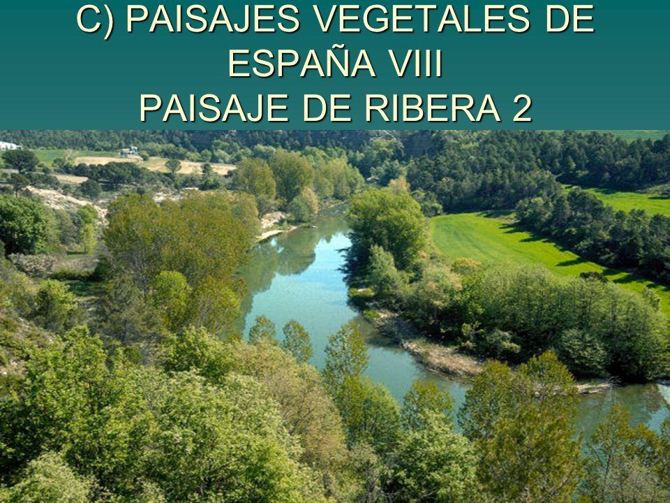 C) PAISAJES VEGETALES DE ESPAÑA VIII PAISAJE DE RIBERA 2