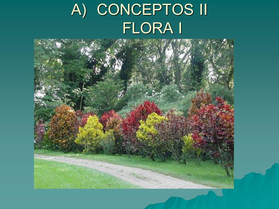 CONCEPTOS II FLORA I