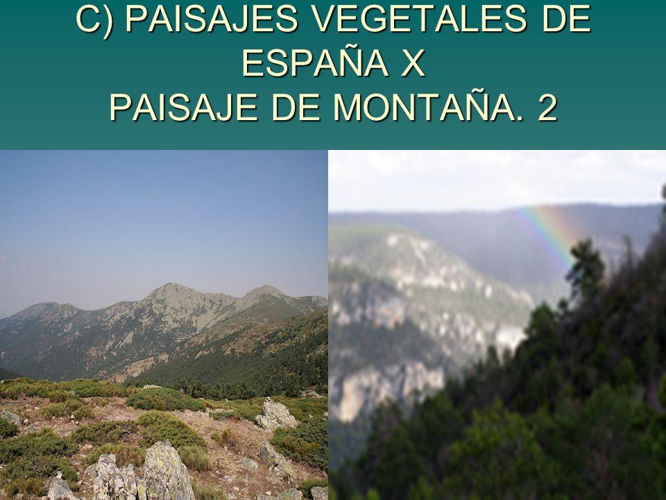 C) PAISAJES VEGETALES DE ESPAÑA X PAISAJE DE MONTAÑA. 2
