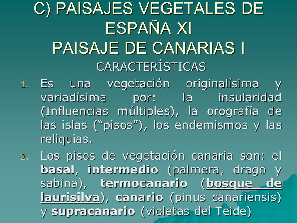 C) PAISAJES VEGETALES DE ESPAÑA XI PAISAJE DE CANARIAS I