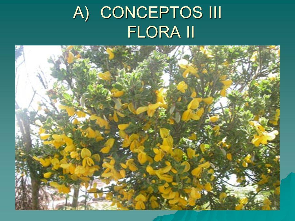 CONCEPTOS III FLORA II