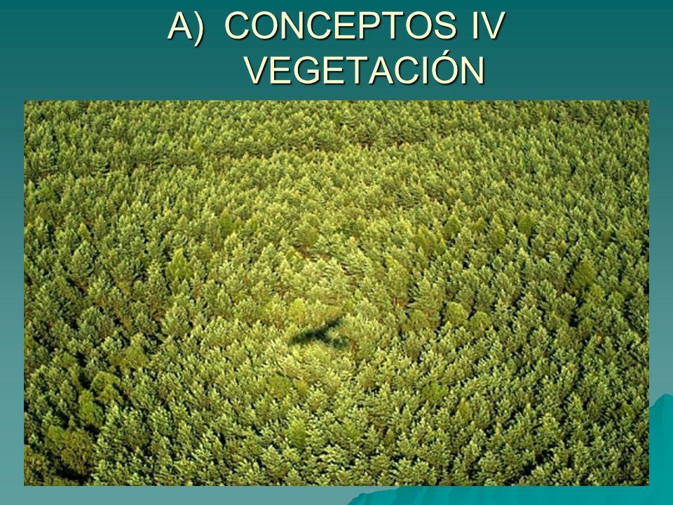 CONCEPTOS IV VEGETACIÓN