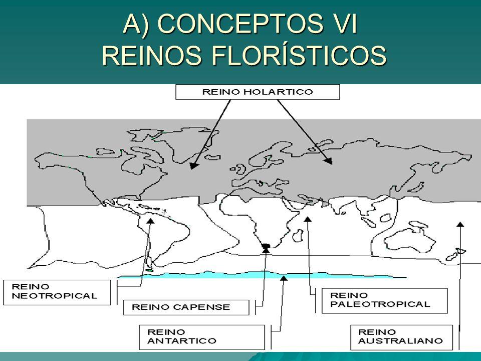 A) CONCEPTOS VI REINOS FLORÍSTICOS