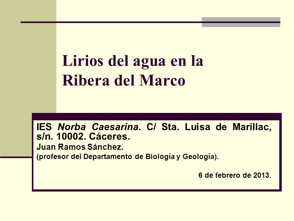 Lirios del agua en la Ribera del Marco