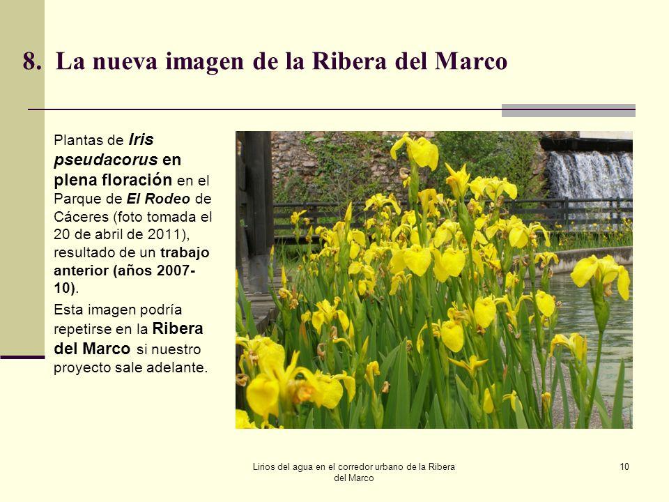 8. La nueva imagen de la Ribera del Marco