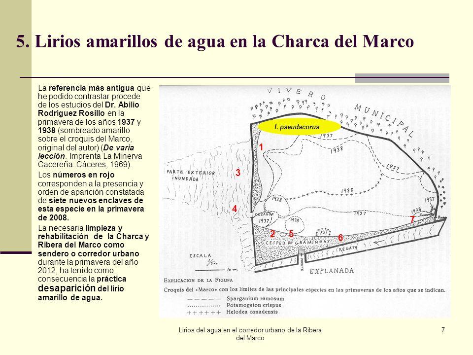 5. Lirios amarillos de agua en la Charca del Marco