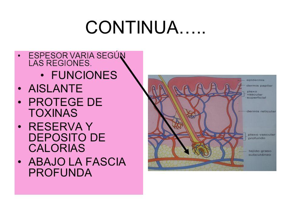 CONTINUA….. FUNCIONES AISLANTE PROTEGE DE TOXINAS