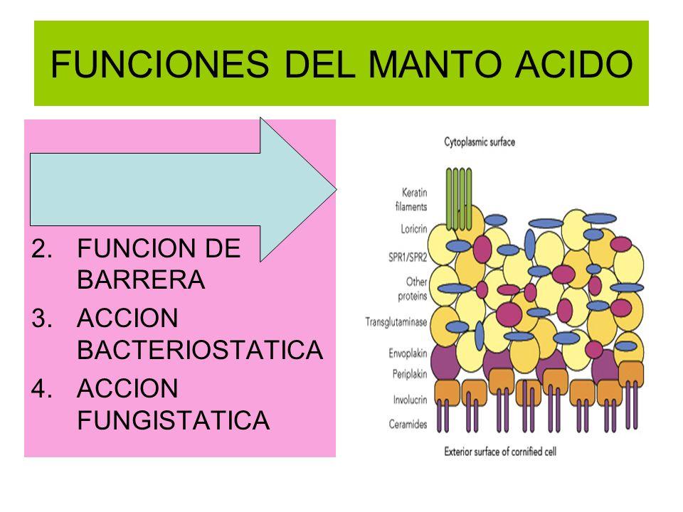 FUNCIONES DEL MANTO ACIDO