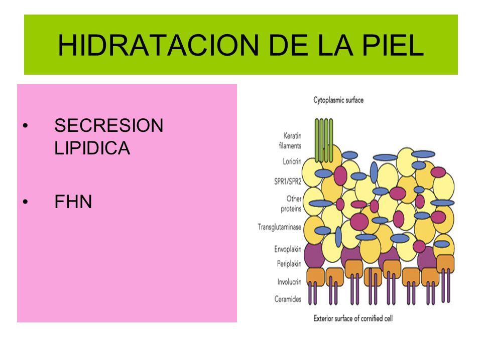 HIDRATACION DE LA PIEL SECRESION LIPIDICA FHN