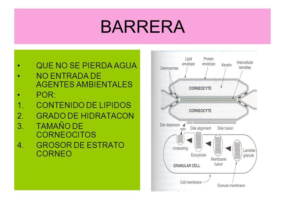 BARRERA QUE NO SE PIERDA AGUA NO ENTRADA DE AGENTES AMBIENTALES POR: