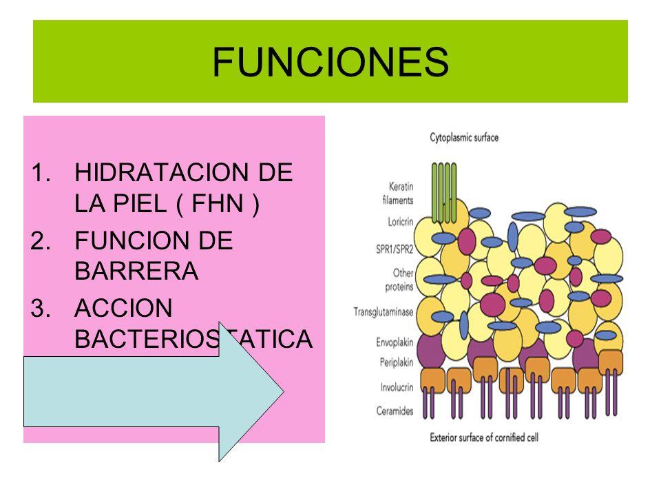 FUNCIONES HIDRATACION DE LA PIEL ( FHN ) FUNCION DE BARRERA