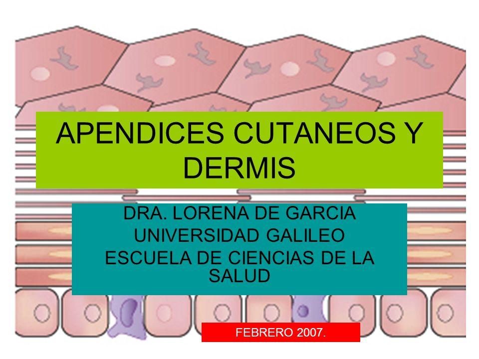 APENDICES CUTANEOS Y DERMIS