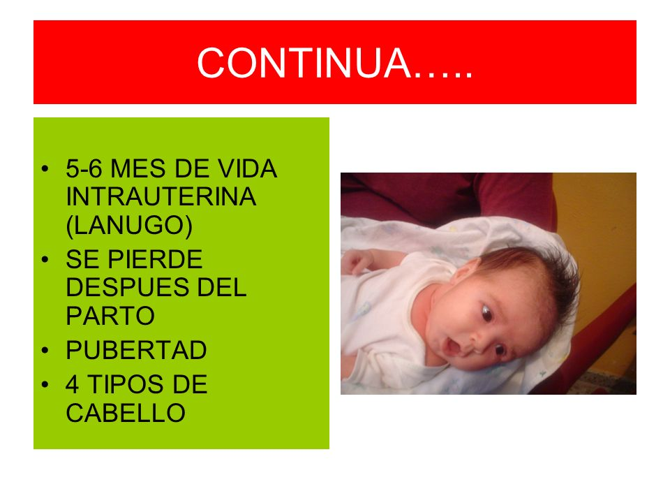 CONTINUA….. 5-6 MES DE VIDA INTRAUTERINA (LANUGO)