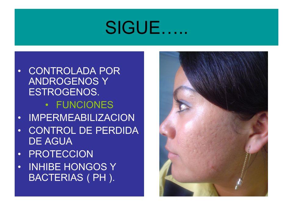 SIGUE….. CONTROLADA POR ANDROGENOS Y ESTROGENOS. FUNCIONES
