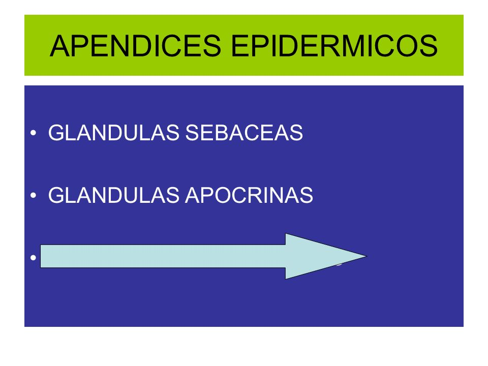 APENDICES EPIDERMICOS