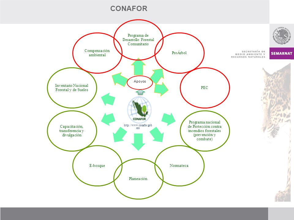 CONAFOR Programa de Desarrollo Forestal Comunitario ProÁrbol PEC