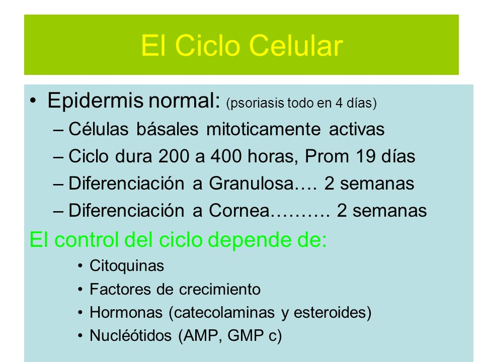 El Ciclo Celular Epidermis normal: (psoriasis todo en 4 días)