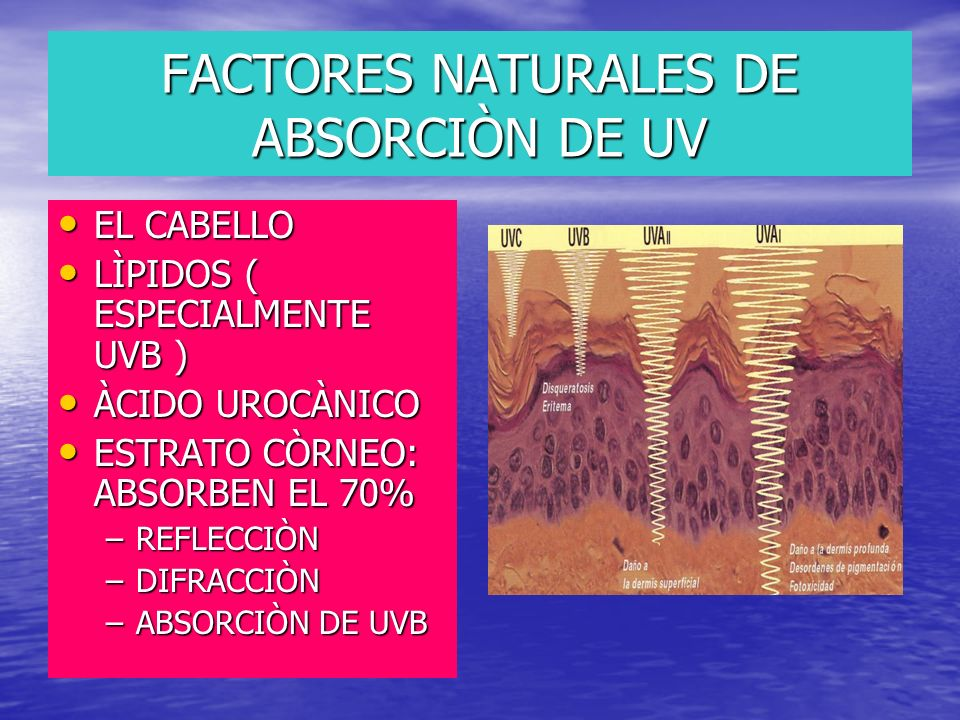 FACTORES NATURALES DE ABSORCIÒN DE UV