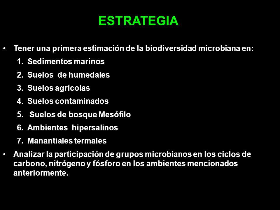 ESTRATEGIA Tener una primera estimación de la biodiversidad microbiana en: Sedimentos marinos. Suelos de humedales.