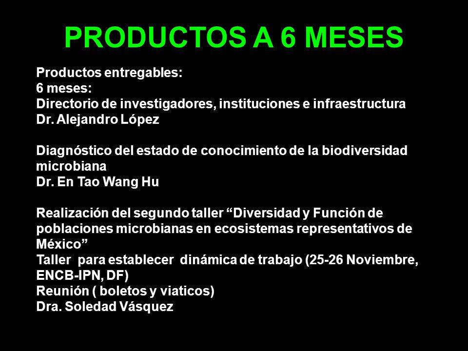 PRODUCTOS A 6 MESES Productos entregables: 6 meses: