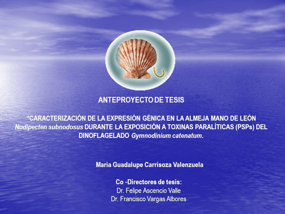 María Guadalupe Carrisoza Valenzuela Co -Directores de tesis: