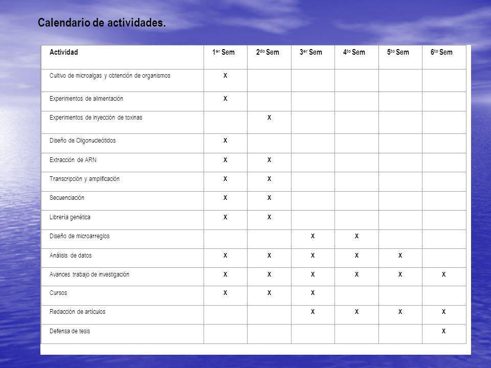 Calendario de actividades.