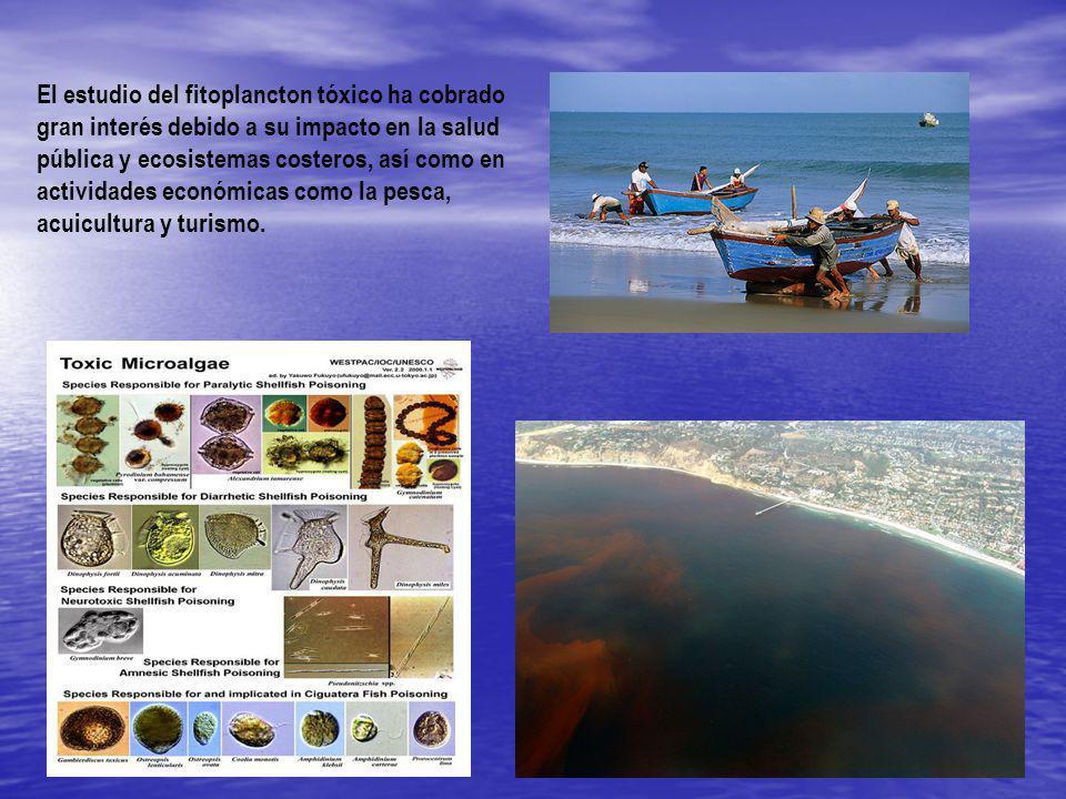 El estudio del fitoplancton tóxico ha cobrado gran interés debido a su impacto en la salud pública y ecosistemas costeros, así como en actividades económicas como la pesca, acuicultura y turismo.