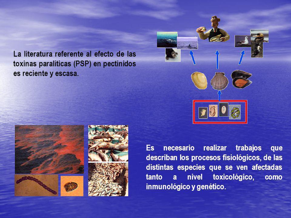 La literatura referente al efecto de las toxinas paralíticas (PSP) en pectínidos es reciente y escasa.