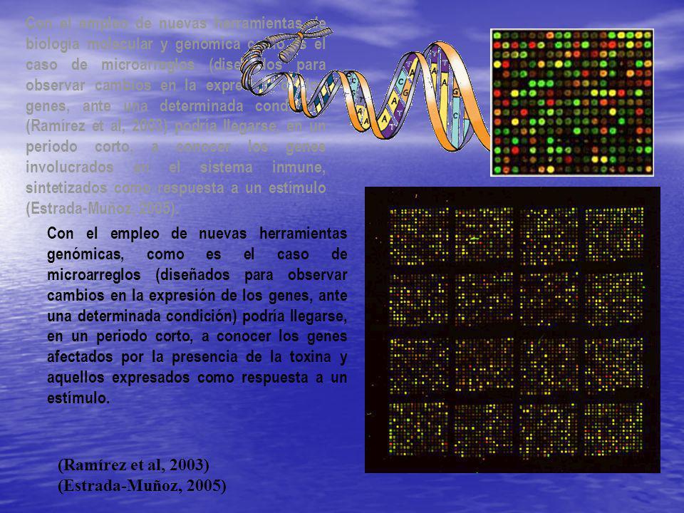 Con el empleo de nuevas herramientas de biología molecular y genómica como es el caso de microarreglos (diseñados para observar cambios en la expresión de los genes, ante una determinada condición) (Ramírez et al, 2003) podría llegarse, en un periodo corto, a conocer los genes involucrados en el sistema inmune, sintetizados como respuesta a un estímulo (Estrada-Muñoz, 2005).