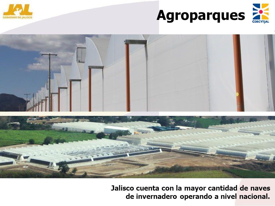 Agroparques Jalisco cuenta con la mayor cantidad de naves de invernadero operando a nivel nacional.
