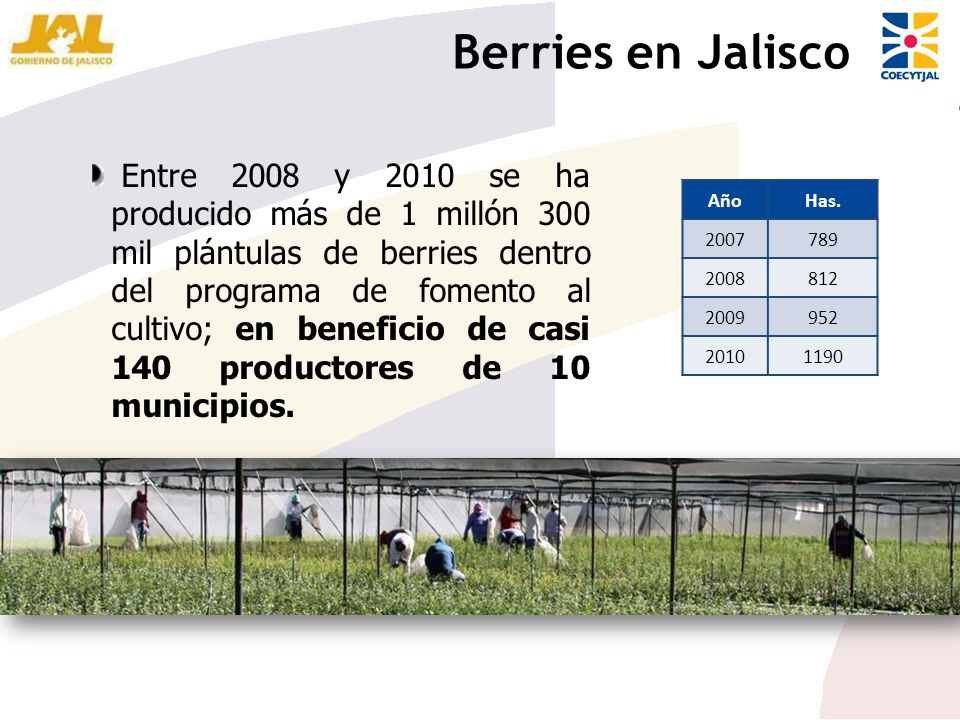 Berries en Jalisco
