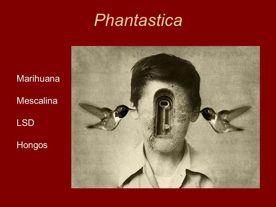 Phantastica Marihuana Mescalina LSD Hongos Lewin, 1924
