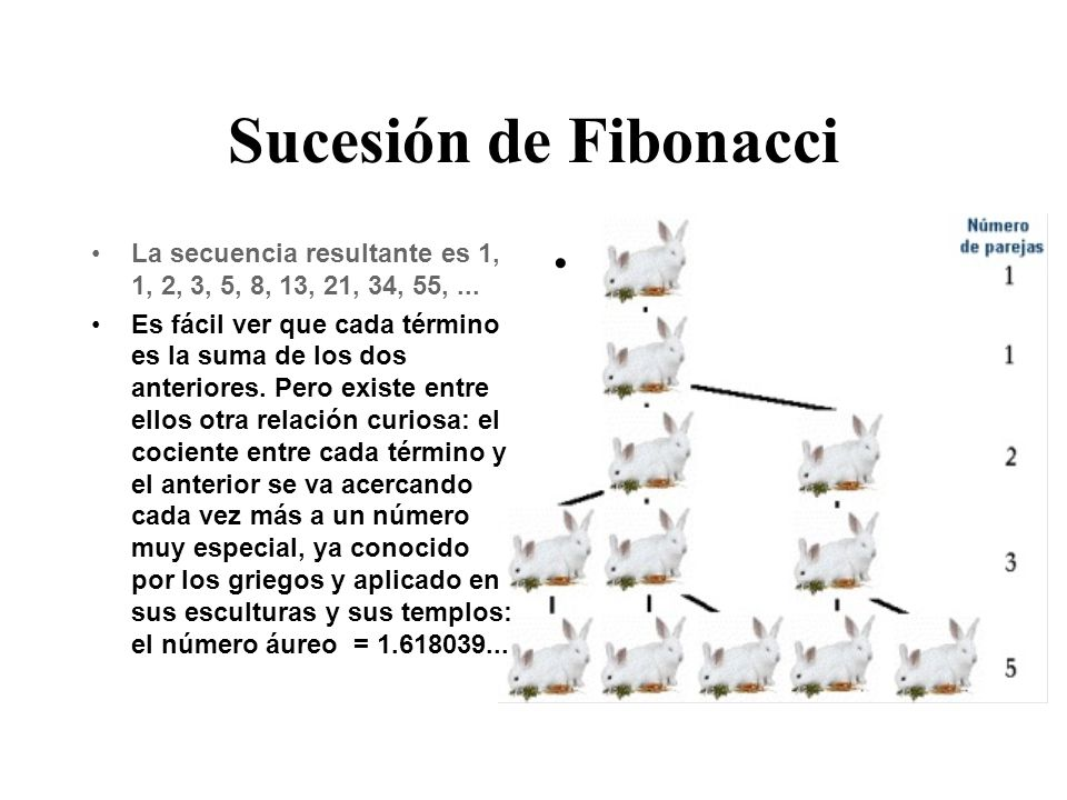 Sucesión de Fibonacci La secuencia resultante es 1, 1, 2, 3, 5, 8, 13, 21, 34, 55, ...